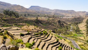 The prehispanic agricultural terraces of Andamarca